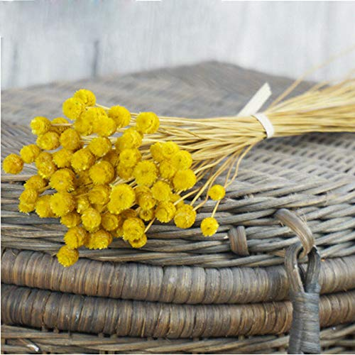 AESTHING Natural Dry Flowers Happy Flower Bundles-Flowers Bouquet for Wedding DIY Home Party 1 Bundle 50pcs Pack (Yellow)