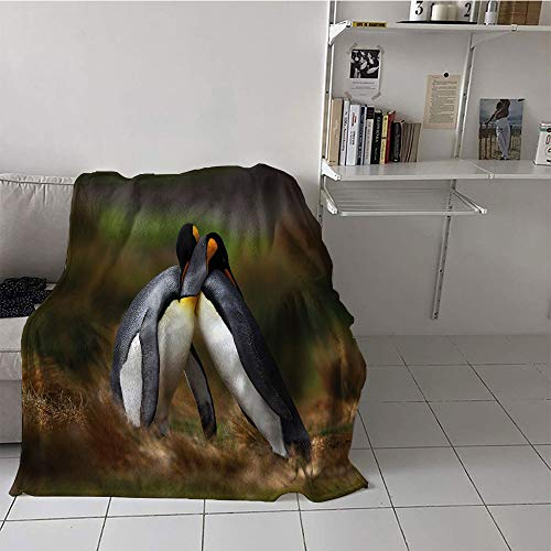 Custom homelife Children's Blanket pop Warm All Season Blanket for (50 by 60 Inch,Animal,Penguins Cuddling in Wild Nature Love Valentines Affection Romance Falkland Islands,Multicolor, ()