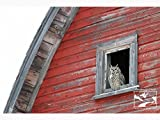 Owl in Barn Window – Wildlife Photography, Nature Photography, Wildlife, Nature, Owl, Home Décor, Wall Art, Picture, Prints, Canvas