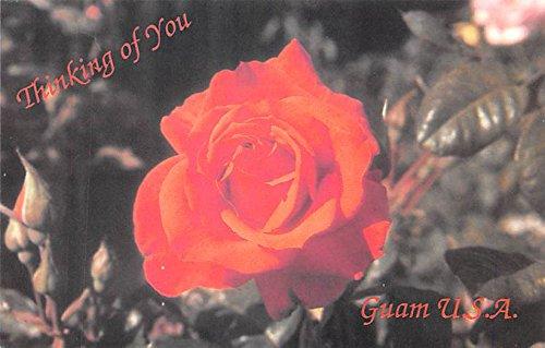 Flower Guam Postcard ()