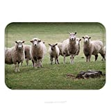 Flannel Microfiber Non-slip Rubber Backing Soft Absorbent Doormat Mat Rug Carpet A Herd Of Sheep Gather To Pose For A Photograph On A New Zealand Golf Course 250295386 for Indoor/Outdoor/Bathroom/Kitc