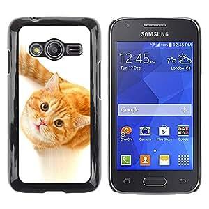 Be Good Phone Accessory // Dura Cáscara cubierta Protectora Caso Carcasa Funda de Protección para Samsung Galaxy Ace 4 G313 SM-G313F // Cute Curious Orange Cat