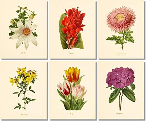 Flower Wall Art - Botanical Prints (Set of 6) - 8x10 - Unframed - Vintage Floral Decor (Vintage Flower Prints)