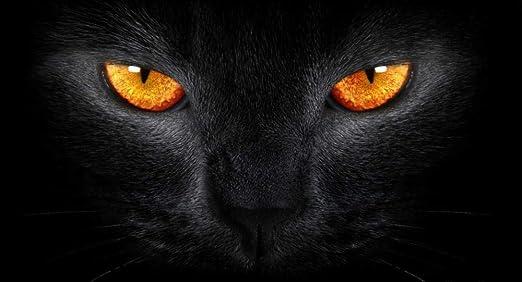 Puzzle De 1000 Piezas Rompecabezas Gato Negro Y Ojos Amarillos ...