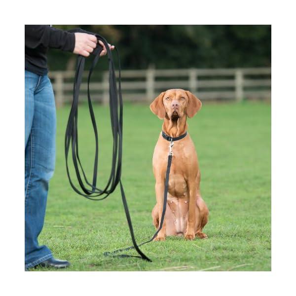 The Company of Animals CLIX Recall Training Line 10m 2