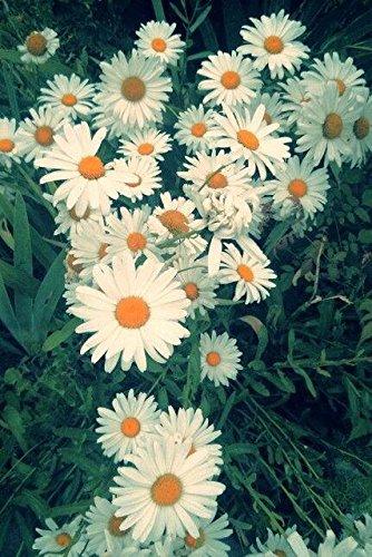 ChinaMarket 100 Pcs/bag Gerbera Daisy White Seeds New Hybrids Mixed Flower Pot Bonsai Plants Easy To Grow For Jardin Garden Flowers Seed -