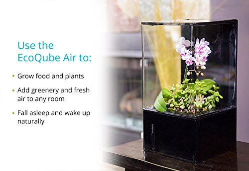 EcoQube Air - Decorative Hydroponics Indoor Herb Home Garden Kit with LED Grow Light, Basil Seeds and True Hepa-Type Filter Air Purifier by EcoQube (Image #3)