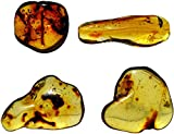 DINOSAURS ROCK Genuine Colombian Amber Fossil
