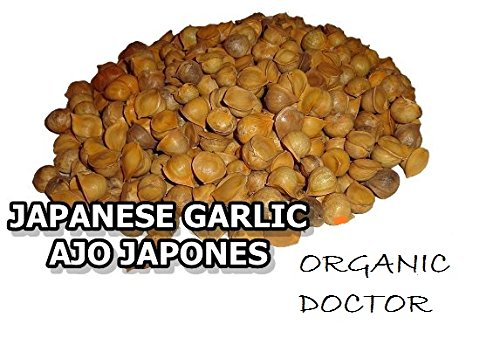 Japanese Garlic//Ajo Japones (100% Natural!!) Choose your count per: (30-60-130-150-250-400) (400)