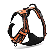 Chai's Choice Best Outdoor Adventure Dog Harness (X-Small, Orange)