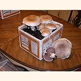 Seasonal Giant Heirloom Portabella Mushroom Growing Kit