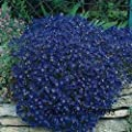 airrais 100pcs Climbing Roses Parthenocissus Rock Cress Seeds Gardern Balcony Decor Plants Flowers