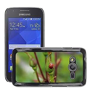 Etui Housse Coque de Protection Cover Rigide pour // M00114151 Mariquita del insecto del insecto Red // Samsung Galaxy Ace4 / Galaxy Ace 4 LTE / SM-G313F