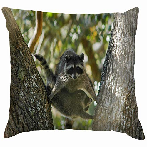 Adult Young Raccoon Performing Acrobatics Oak Animals Wildlife Pillow Case Throw Pillow Cover Square Cushion Cover 16X16 Inch]()