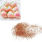Yardwe 50PCS Strawberry Seed for Planting Indoor Or Outdoor Fruit Seeds for Potted Plants Bonsai Home Garden Planting (White)