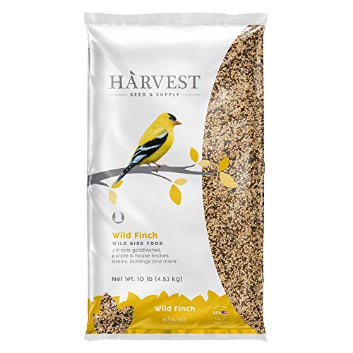 Best Seed For Finches