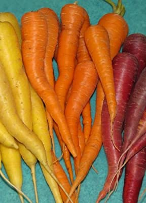 Carrot Gardener's Christmas Gift- 8 Heirloom Varieties- Non-GMO