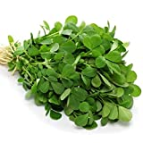 Fenugreek Herb Seeds for Growing Curry, Sprouts or Microgreens bin129 (120 Seeds)