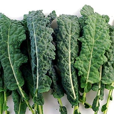 Kale Italian Lacinato Nero Toscana Seeds ? Certified Organic Kale Seeds (100+ seeds) ? by PowerGrow Systems
