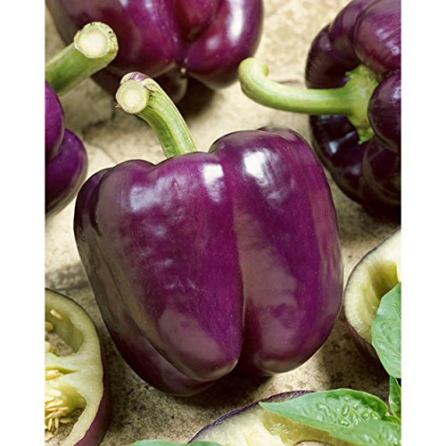- Lilac-Lavender Bell Purple Sweet Pepper Organic Seeds up to 30 Seeds