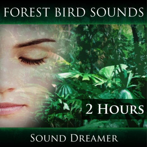 Bird Sounds - Forest Bird Sounds (2 Hours)