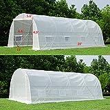 Mellcom 20' x 10' x 7' Greenhouse Large Gardening