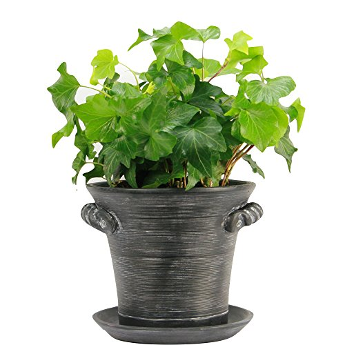 "Window Garden Rustic Charm 6"" Planter - Fine Home Décor Ceramic Indoor Decorative Pot. For Herbs, Flowers, Succulents or Starting Seeds. Beautifully Packaged, Great Gift for (Rectangular Concrete)"