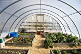 Greenhouse Film 4 year 6mil Clear 24' x 50'