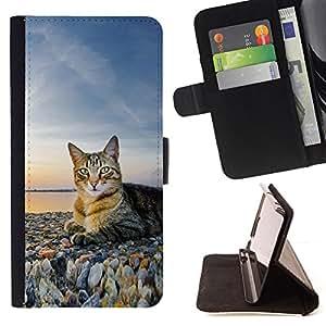 - House Cat Nature Sunset Shorthair British - - Prima caja de la PU billetera de cuero con ranuras para tarjetas, efectivo desmontable correa para l Funny HouseFOR Apple Iphone 6