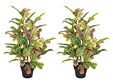 Pair AMERIQUE Gorgeous 4.5 Feet Tropical Codiaeum Trees Artificial Silk Plant, with Nursery Plastic Pots, UV Protection, Feel Real Technology, Super Quality