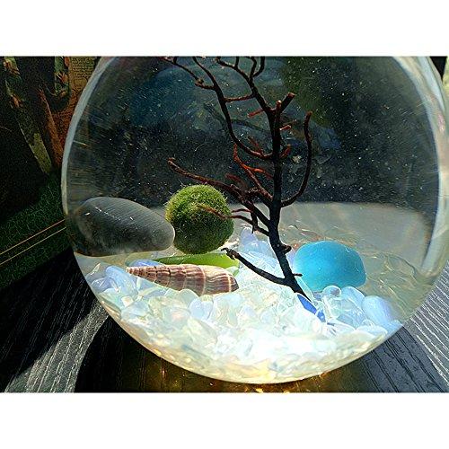 Live Marimo Ball in a Bulb Aqua Terrarium Table Decor Mini Aquarium Home Decor Gift for Friends1 x 15mm marimo