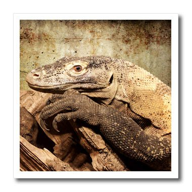 3dRose Uta Naumann Photography Animal - Monitor lizard or Komodo dragon - 6x6 Iron on Heat Transfer for White Material (Komodo Monitors)