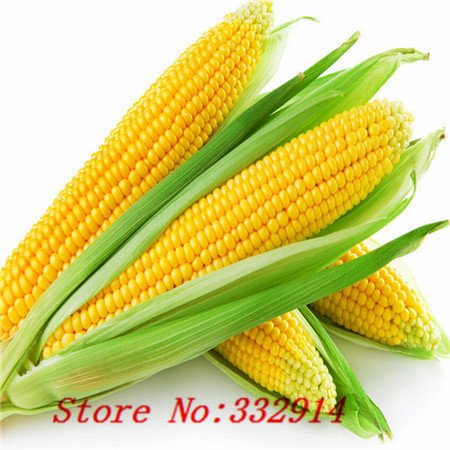 Hot Sale 20 8 kinds of corn Rare Seeds Sweet Corn Fresh Organic Heirloom Vegetable Seed Fruit Corn BLUE GIANT C STRAWBERRY POPCO SVI