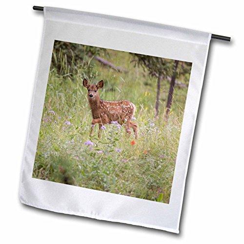 3dRose Danita Delimont - Deer - USA, Colorado, Woodland Park. Mule deer fawn in meadow. - 12 x 18 inch Garden Flag - 12 Meadows Park