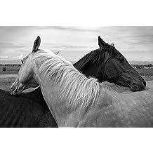 Black and White Horse - E - Art Print Poster,Wall Decor,Home Decor(36x24inches)