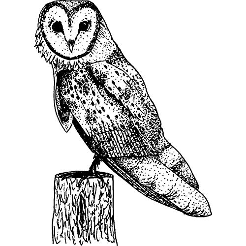 - A8 'Barn Owl' Unmounted Rubber Stamp (RS00018897)