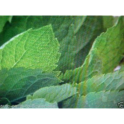 Cutdek HERB PEPPERMENT Seeds : Garden & Outdoor