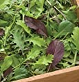 David's Garden Seeds Greens Mix Braising DGS2302 (Green) 500 Open Pollinated Seeds