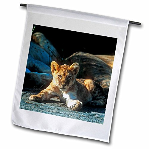 3dRose Danita Delimont - Baby Animals - African Lion, Panthera leo, Cub Resting with its Family - 12 x 18 inch Garden Flag (African Lion Panthera Leo)
