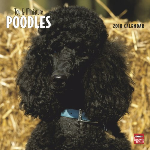 Poodles, Toy and Miniature 2010 Square Wall (Multilingual Edition)