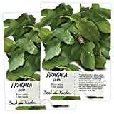 Seed Needs, Arugula Herb (Eruca Sativa) Twin Pack of 1,000 Seeds Each Non-GMO