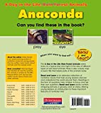 Anaconda (A Day in the Life: Rain Forest Animals)