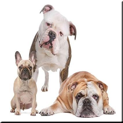 6 x 6 Rikki Knight White Bull Dog Design Ceramic Art Tile