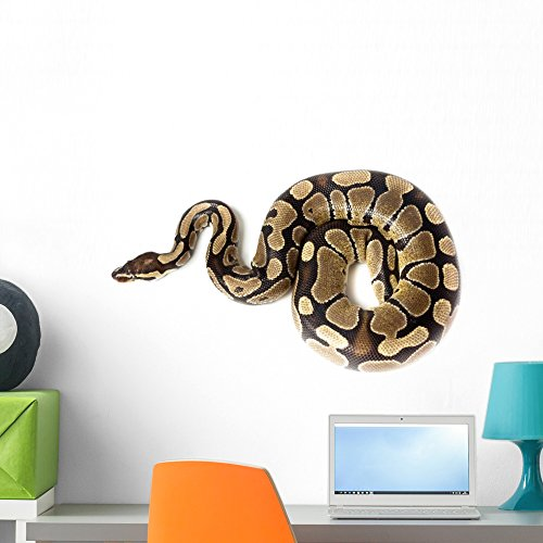 Wallmonkeys Royal or Ball Python (regius) Wall Decal Peel and Stick Graphic WM96259 (24 in W x 16 in - Snake Decals Wall