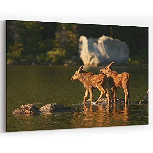 (Moose Twins at Baxter State Park Canvas Art Wall Dector Painting Wall Art Picture Print on)