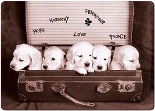 Hope Rectangle Magnet (Puppies hope fridge magnet 3 1/2