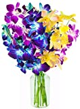 Exotic Rainbow Orchid Bouquet of 5 Blue Dendrobium Orchids, 3 Purple Dendrobium Orchids, and 2 Yellow Dendrobium Orchids from Thailand with Free Vase Included