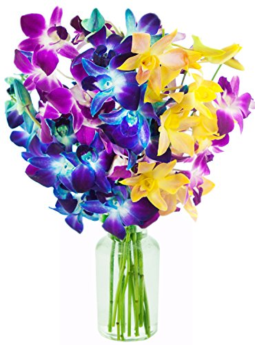 KaBloom Valentine's Day Special: Exotic Rainbow Orchid Bouquet of 5 Blue Dendrobium Orchids, 3 Purple Dendrobium Orchids, and 2 Yellow Dendrobium Orchids from Thailand with Vase