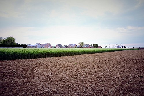 Home Comforts Peel-n-Stick Poster of Rural Cereal Spring Field Agriculture Wheat Poster 24x16 Adhesive Sticker Poster Print