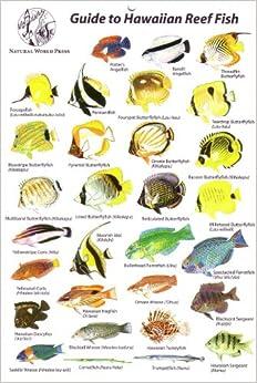Guide To Hawaiian Reef Fish Rod Macpherson 9780939560042